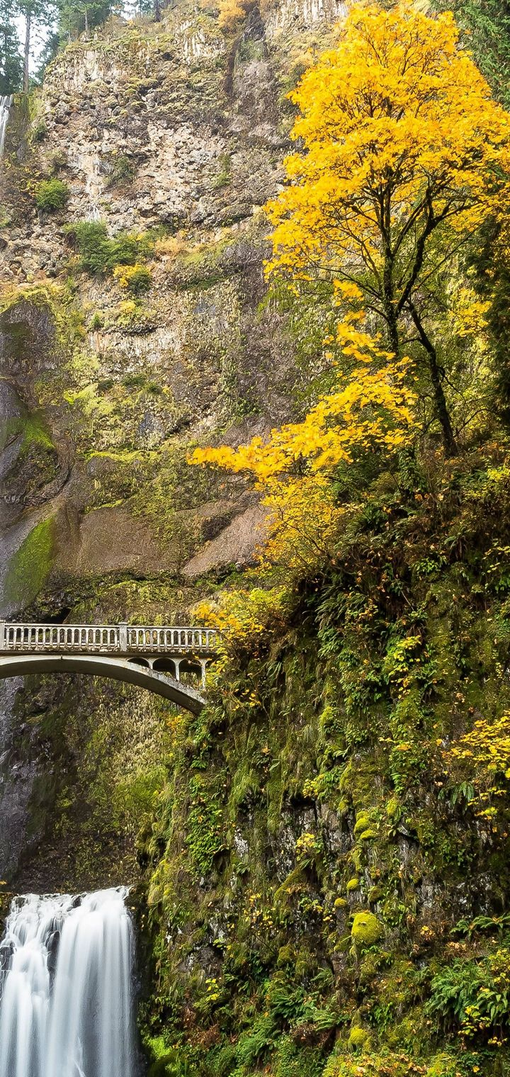 Multnomah Falls Columbia Wallpaper 720x1520