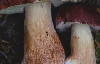 Mushrooms Autumn Foliage Wallpaper 720x1520 340x220