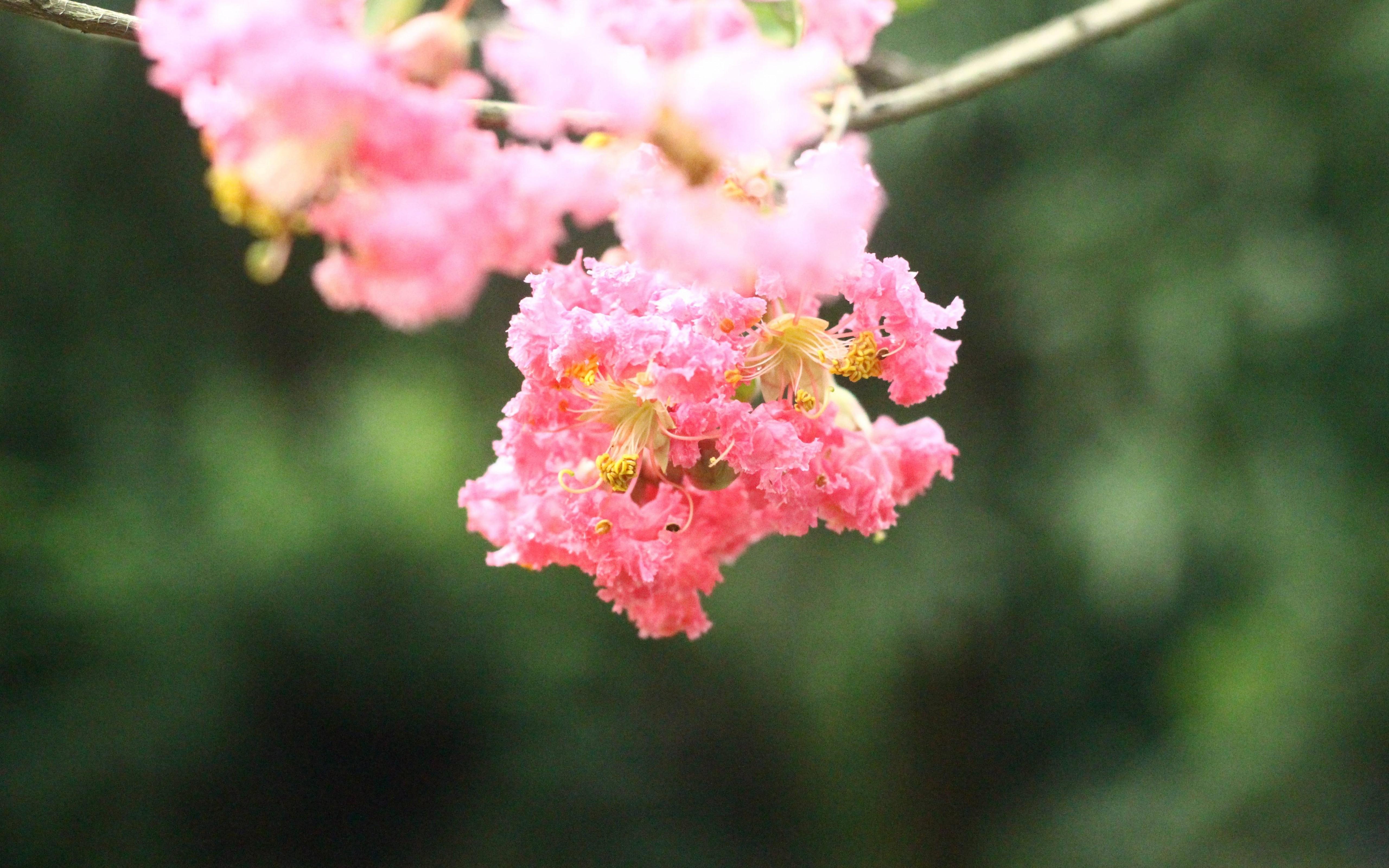 Natural Beauty Of A Flower Wallpaper - [5120x3200]
