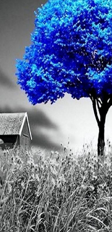 Nature Wallpaper 720x1480 380x781