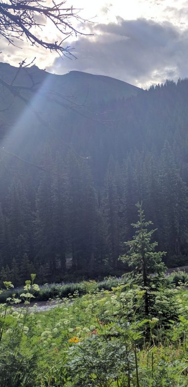Ouray Trail Wallpaper 720x1480 380x781