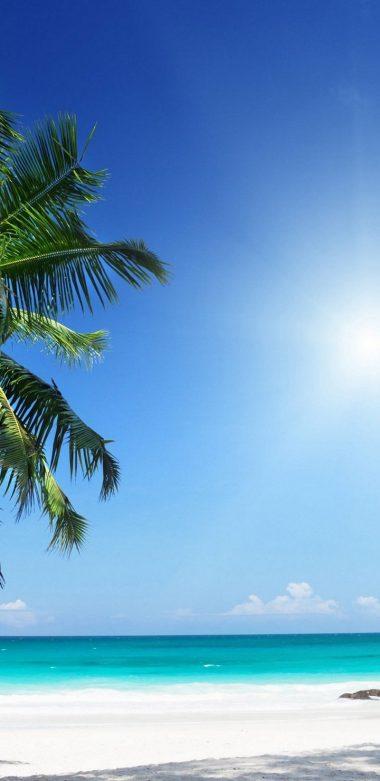 Palm Tree Ultra HD Wallpaper 720x1480 380x781