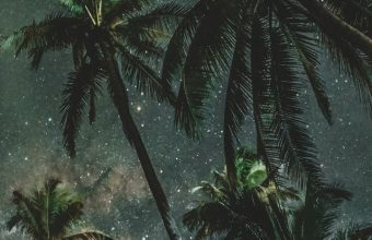 Palms Trees Starry Sky Wallpaper 720x1520 340x220
