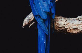 Parrot Bird Branch Wallpaper 720x1520 340x220