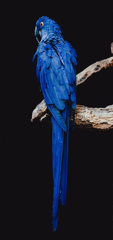 Parrot Bird Branch Wallpaper 720x1520 380x802