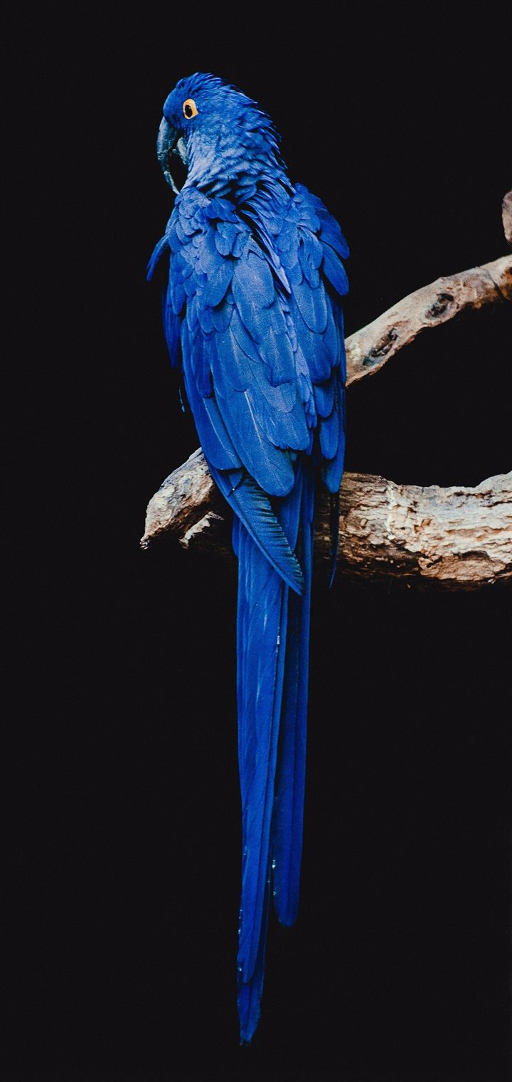 Parrot Bird Branch Wallpaper 720x1520