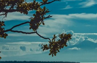 River Shore Trees Sunlight Wallpaper 720x1520 340x220
