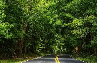 Road Forest Trees Landscape Wallpaper 720x1520 340x220