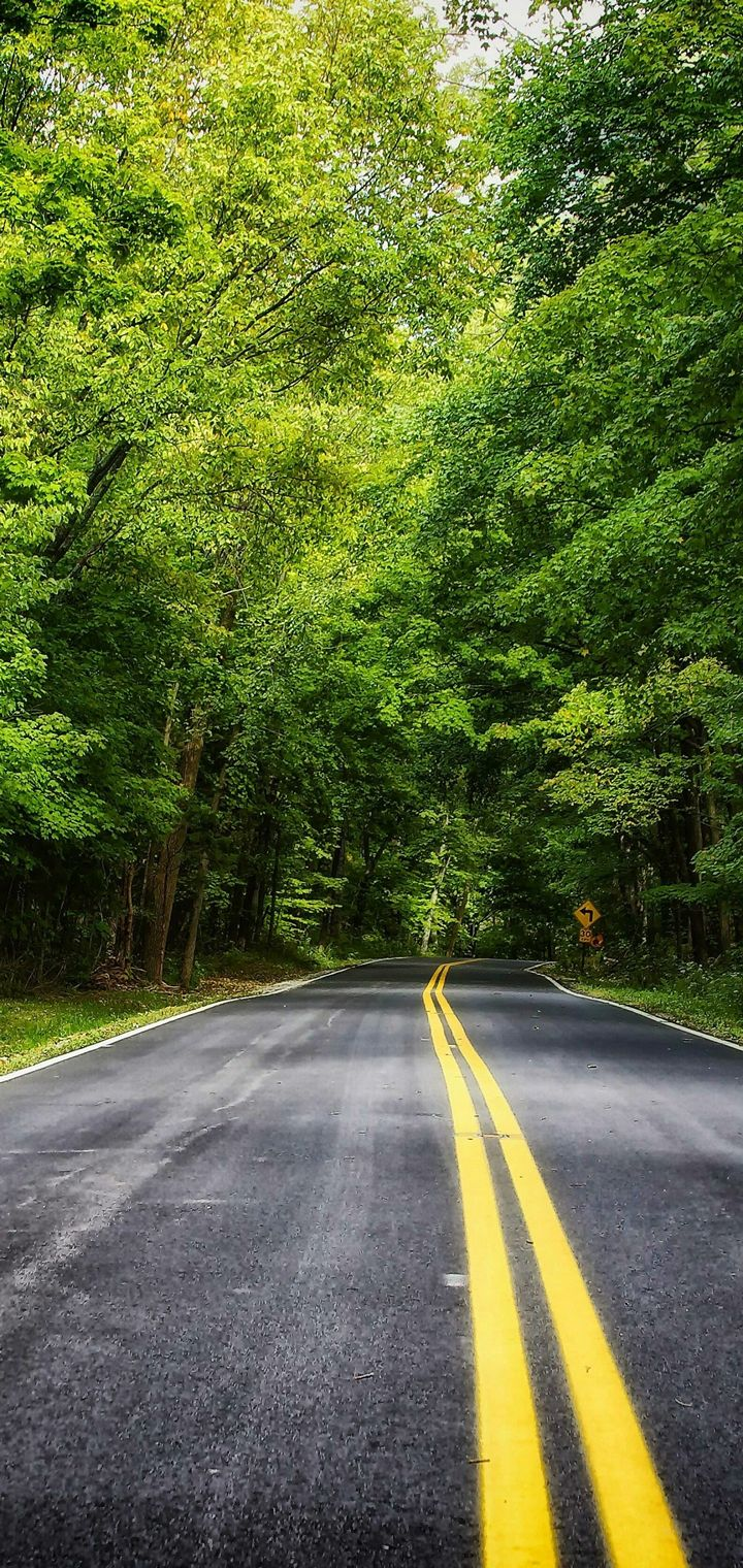 Road Forest Trees Landscape Wallpaper 720x1520