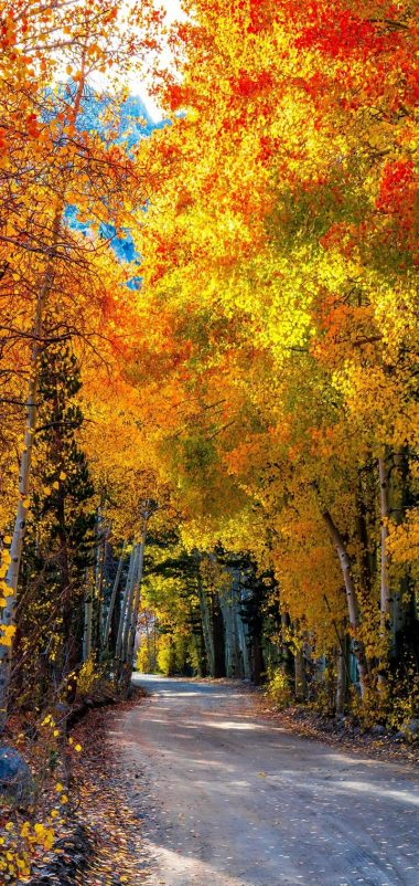 Roads Autumn Forests Trees Wallpaper 720x1520 380x802
