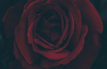 Rose Bud Dark Leaves Wallpaper 720x1520 340x220