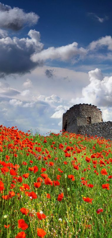 Sky Poppies Clouds Nature Flower Wallpaper 720x1520 380x802