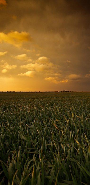 Sunset Fields Wide Wallpaper 720x1480 380x781