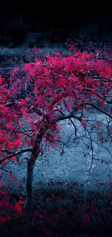 Tree Leaves Fog Light Purple Wallpaper 720x1520 380x802