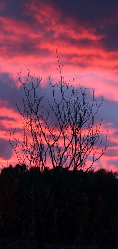 Tree Sunset Night Wallpaper 720x1520 380x802