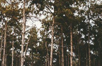 Trees Forest Grass Evening Wallpaper 720x1520 340x220