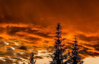 Trees Sunset Sky Wallpaper 720x1520 340x220