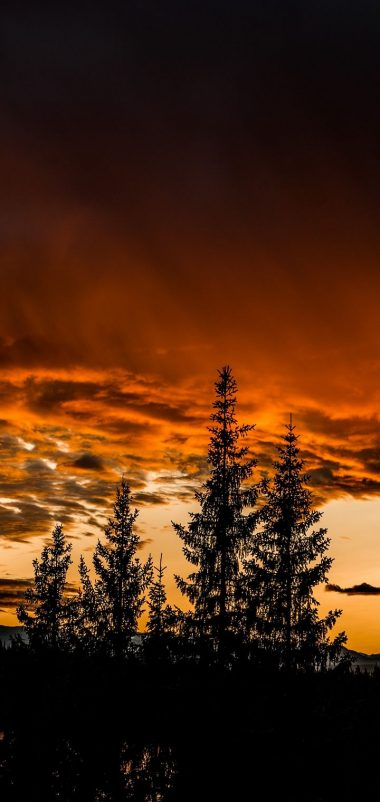 Trees Sunset Sky Wallpaper 720x1520 380x802