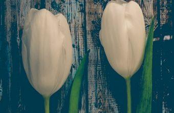 Tulips Flowers Stem Wallpaper 720x1520 340x220