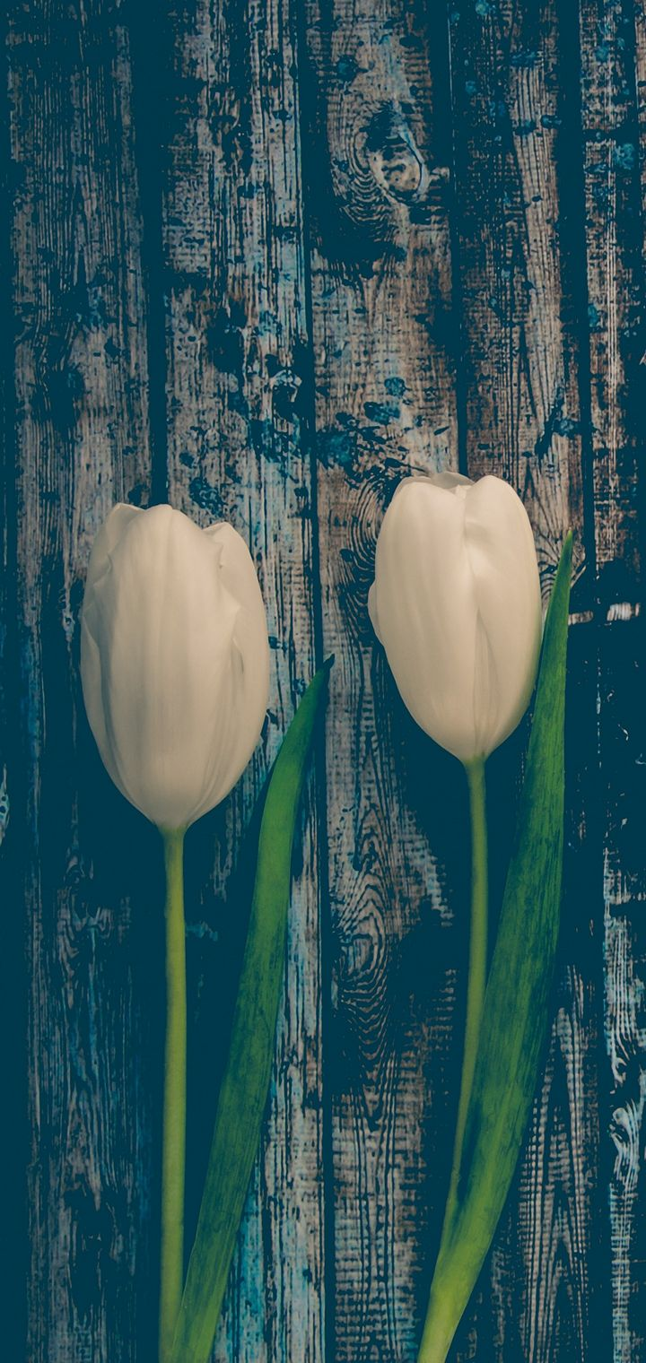 Tulips Flowers Stem Wallpaper 720x1520