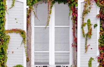 Window Foliage Facade Wallpaper 720x1520 340x220