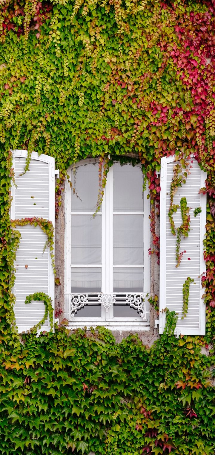 Window Foliage Facade Wallpaper 720x1520
