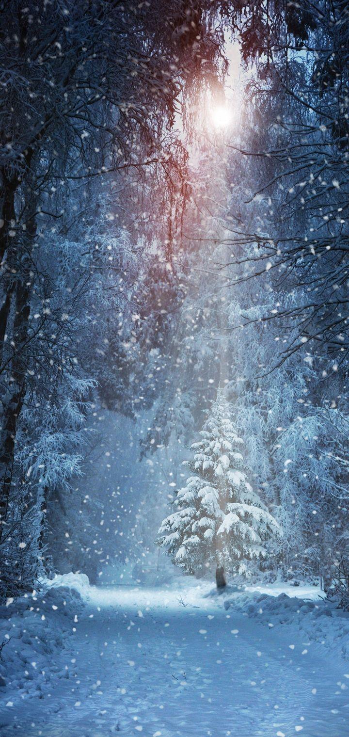 Winter Snow Nature Landscape Wallpaper 720x1520