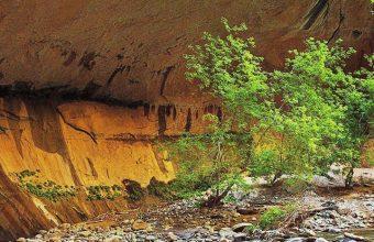 Zion Narrows Rock Wallpaper 720x1520 340x220