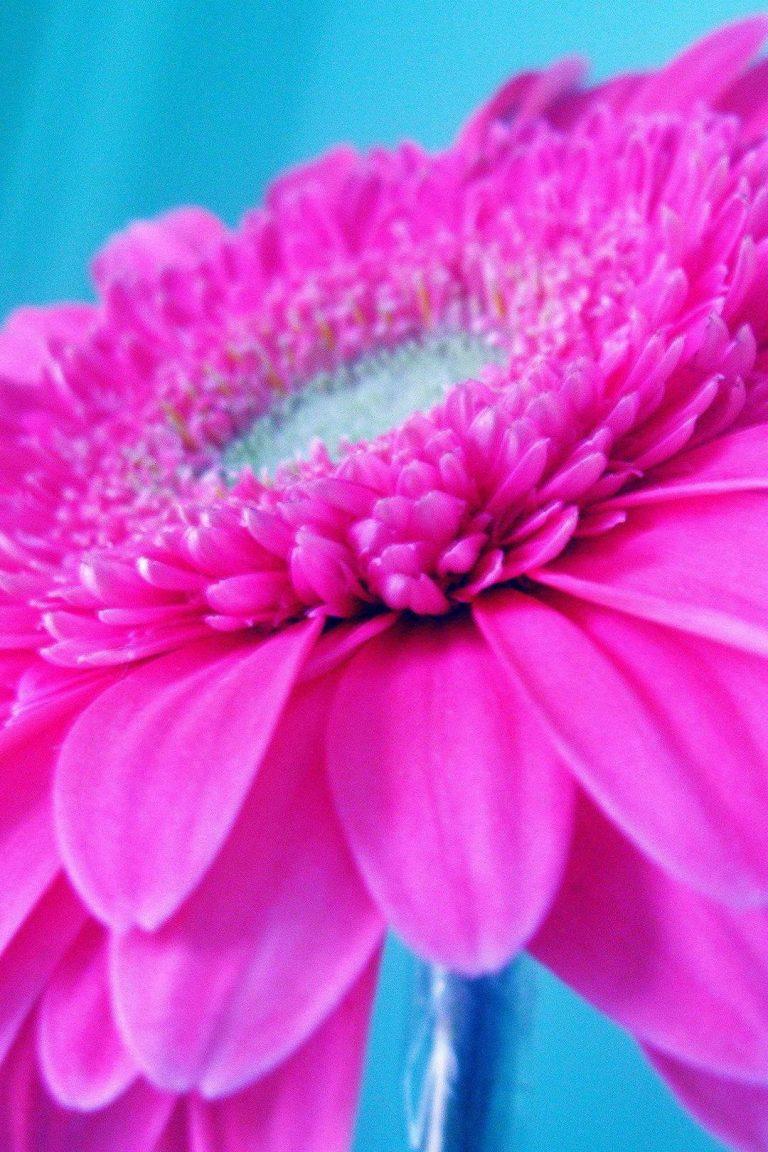 Обои на рабочий стол цветок жизни поздравительная
