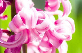 Amazing Pink Flowers 1080x2340 340x220