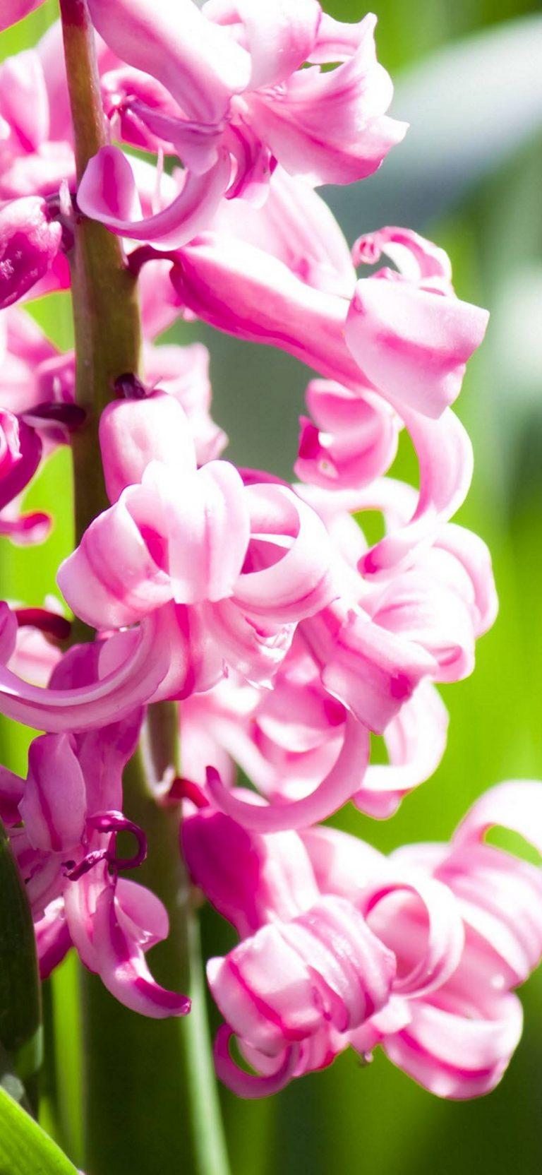 Amazing Pink Flowers 1080x2340 768x1664