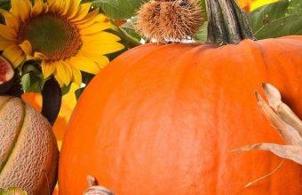 Autumn Harvest Vegetables Fruits 1080x2340 340x220