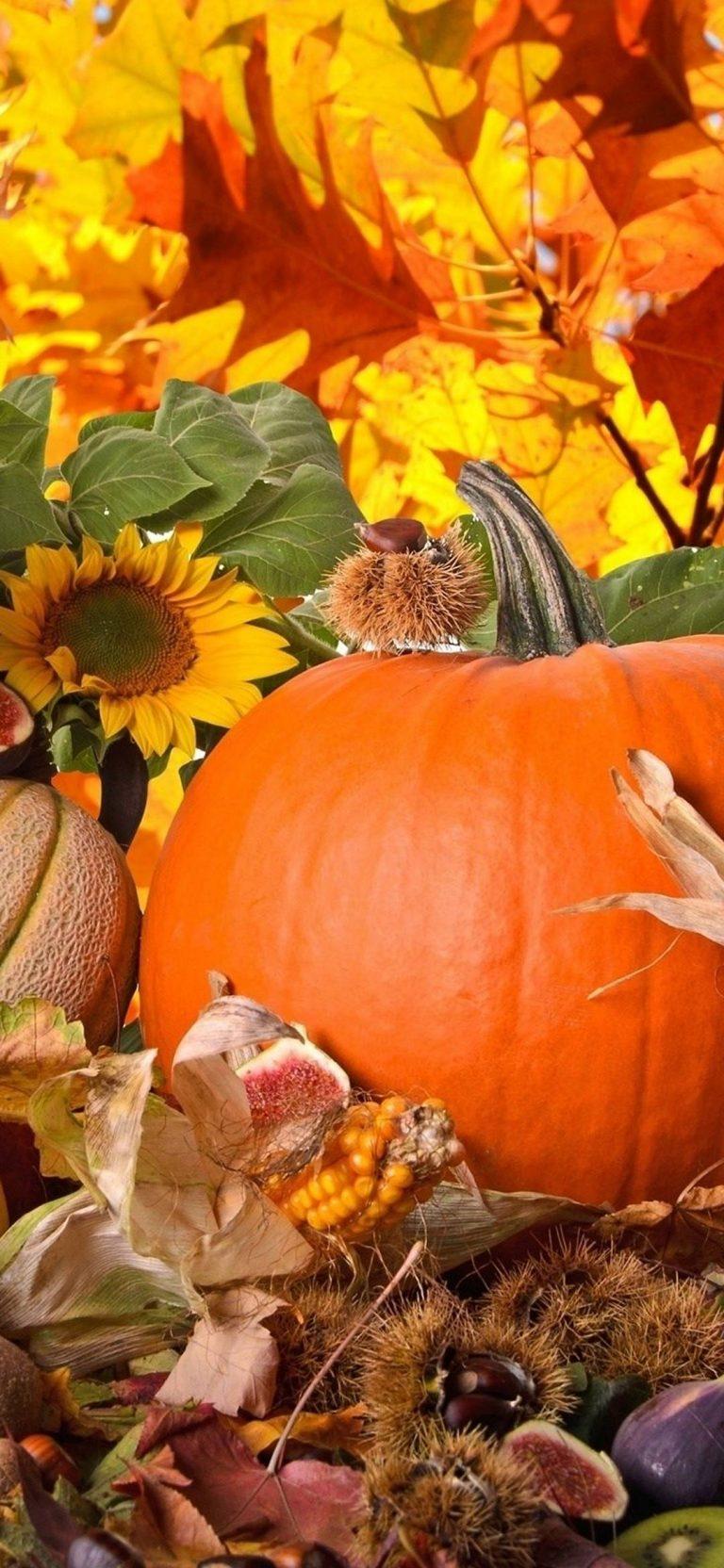 Autumn Harvest Vegetables Fruits 1080x2340 768x1664