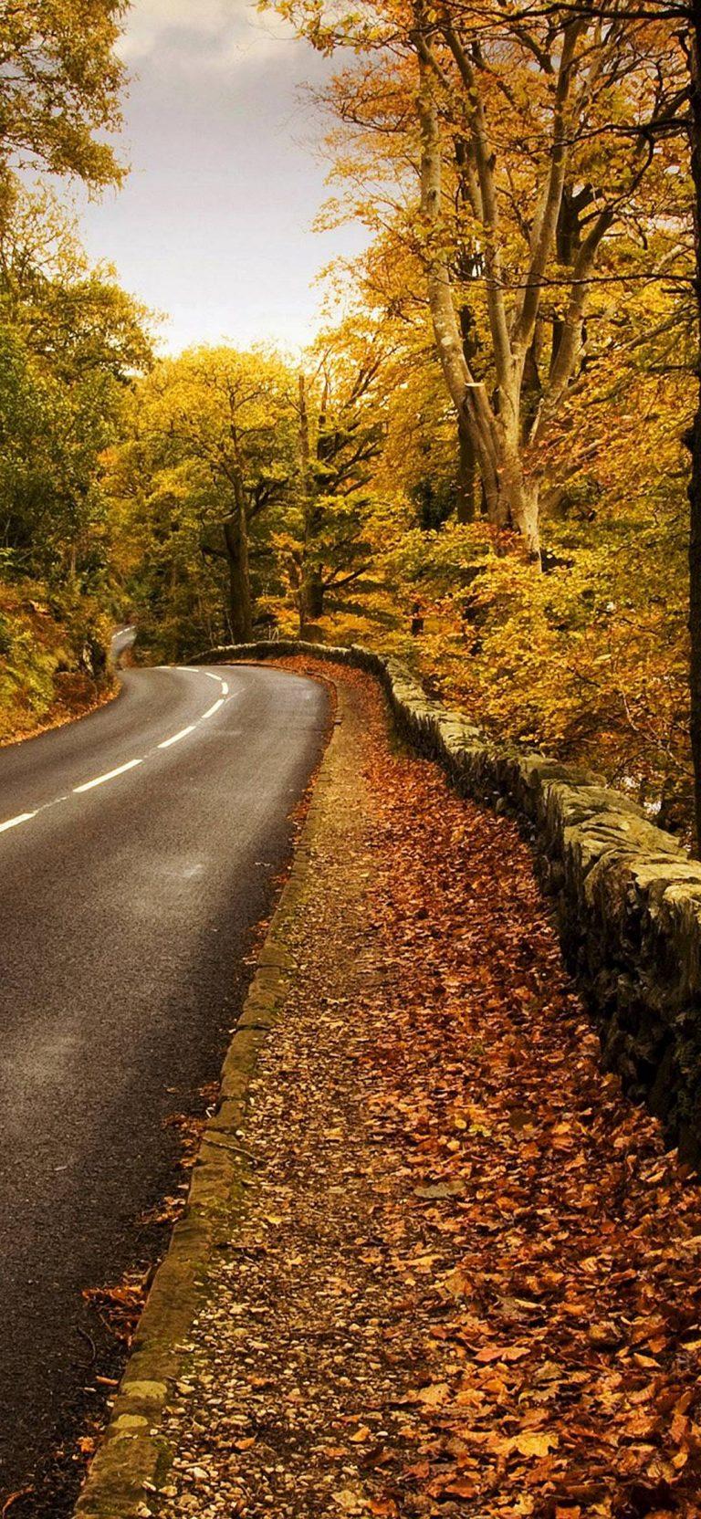 Autumn Road Wallpaper 1080x2340 768x1664