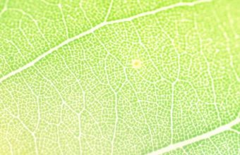 Colors Of Leaf 1080x2340 340x220