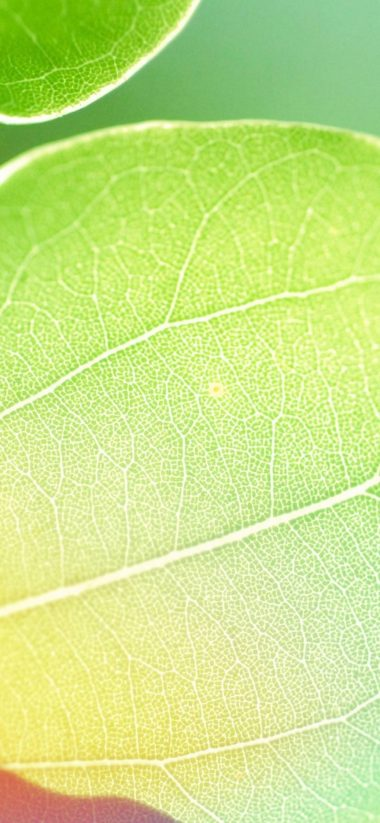 Colors Of Leaf 1080x2340 380x823