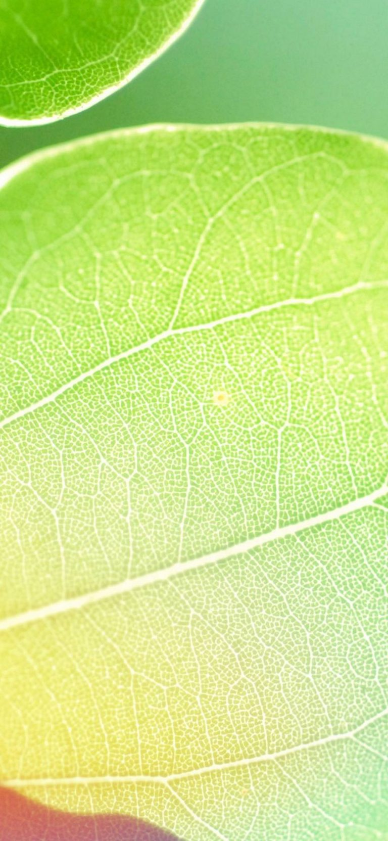 Colors Of Leaf 1080x2340 768x1664