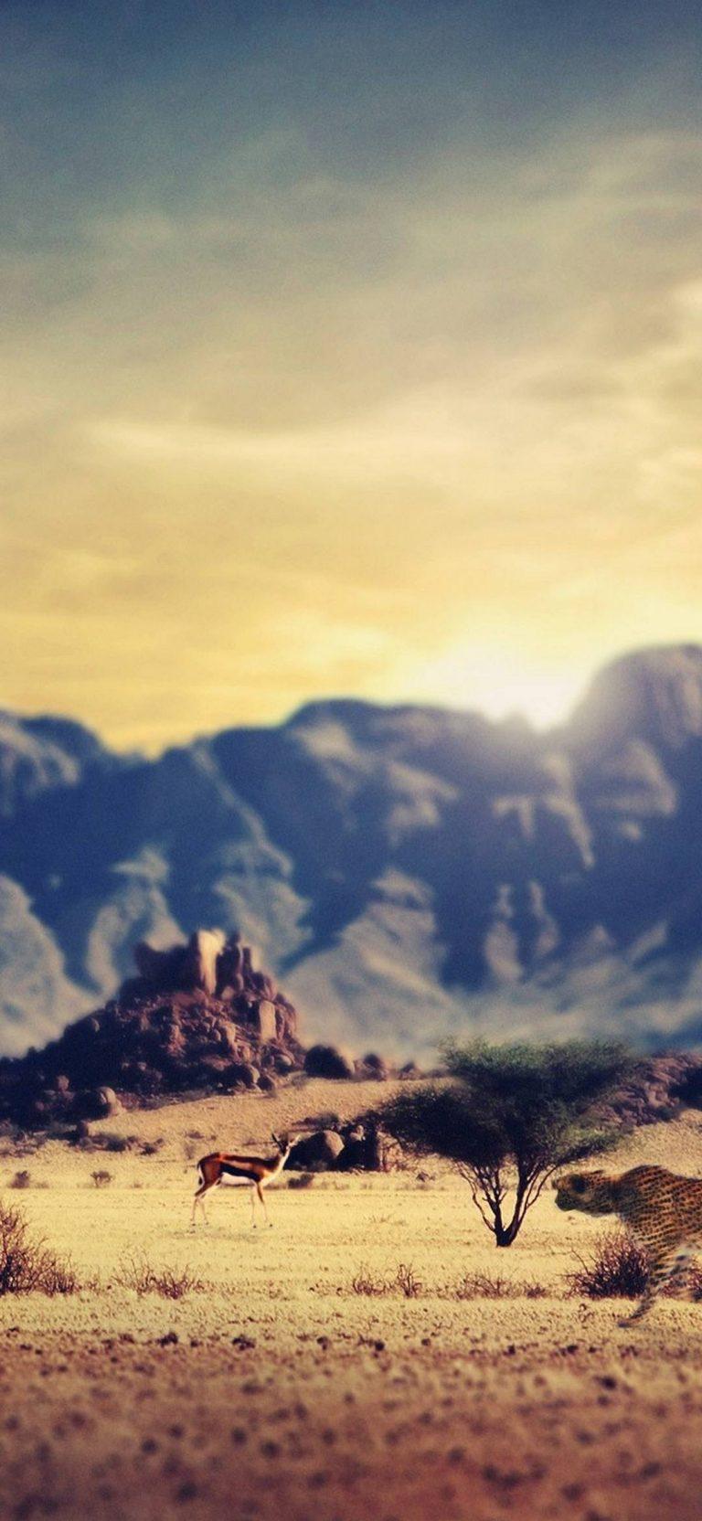 Deserts Wastelands 1080x2340 768x1664