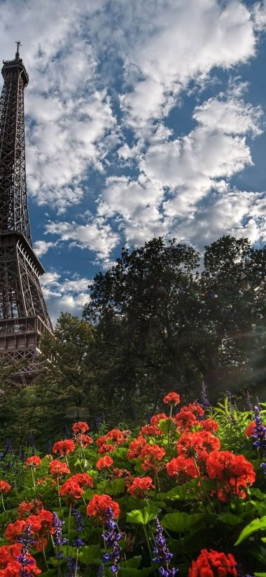 Eiffel Tower Trees 1080x2340 380x823