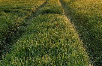 Field Grass Sun Sky 1080x2340 340x220