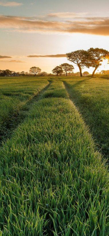 Field Grass Sun Sky 1080x2340 380x823