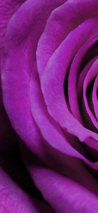 Flowers Purple Macro Flower Petals 1080x2340 380x823