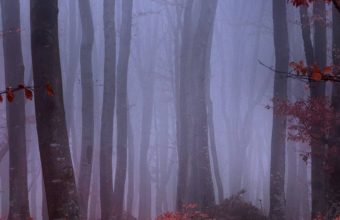 Forest Fog Autumn Trees Branches 1080x2340 340x220