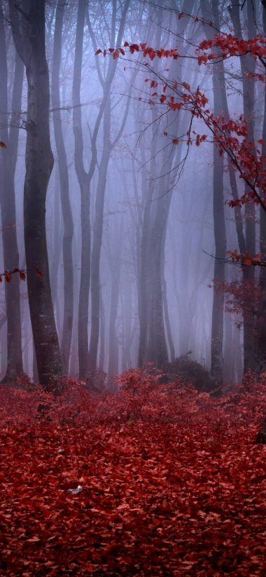 Forest Fog Autumn Trees Branches 1080x2340 380x823