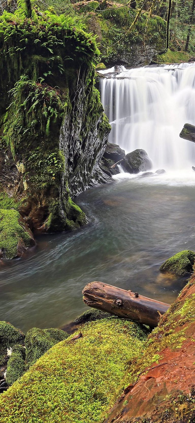 Forest River Waterfall Log Moss Rocks 1080x2340 768x1664