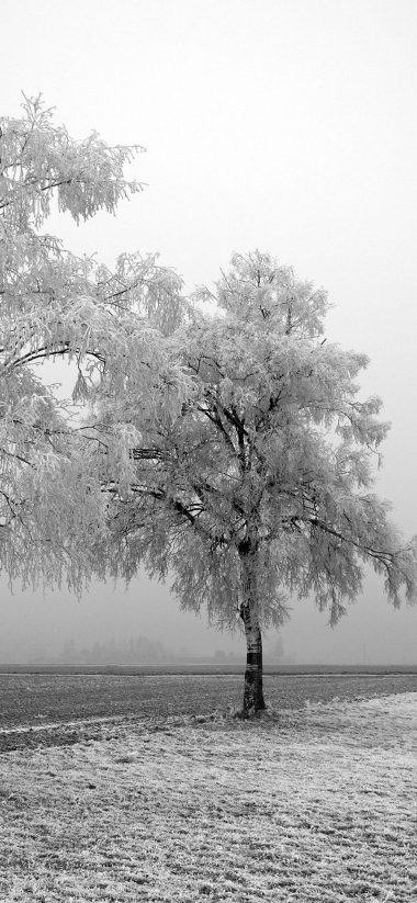 Frozen Trees 1080x2340 380x823