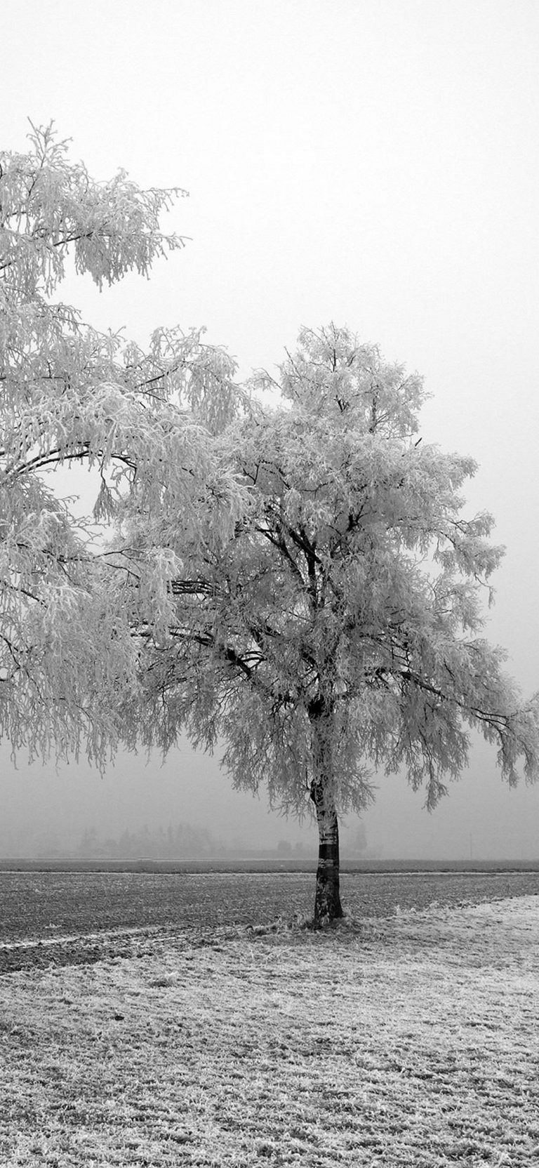 Frozen Trees 1080x2340 768x1664