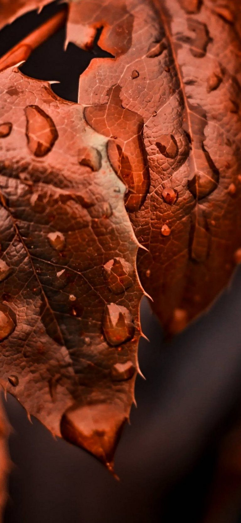 Golden Leaves Water Drops 1080x2340 768x1664