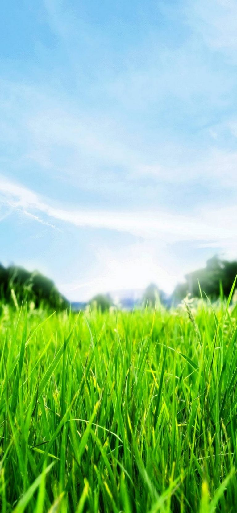 Green Grass HD 1080x2340 768x1664