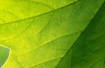 Green Leaf 1080x2340 340x220
